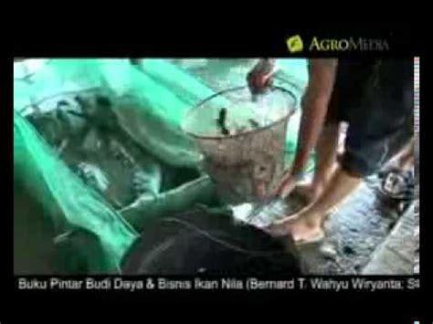 Bibit Lele Sangkuriang Banyuwangi budidaya lele sangkuriang organik 6 doovi