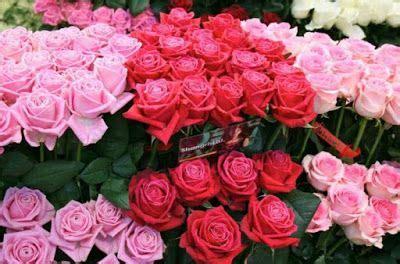 harga bunga mawar merah  tangkaiharga tanaman bunga