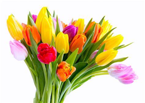 mother s day flower fonds d ecran tulipes bouquets fleurs t 233 l 233 charger photo