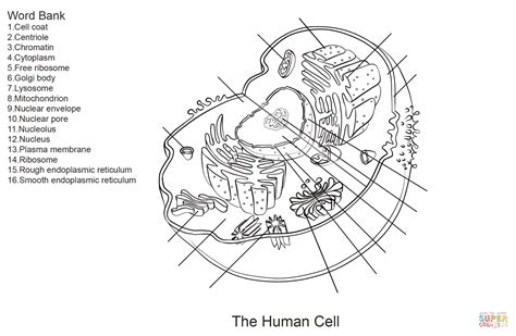 cell membrane coloring activity coloring pages