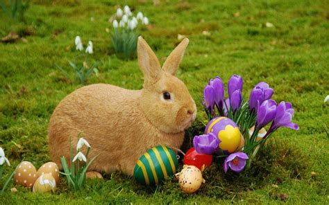 Daster Bunny by Easter Bunny Hd Wallpaper 6743