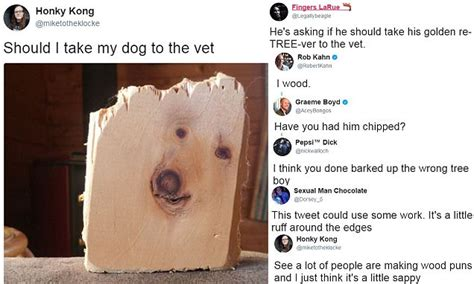 when to take puppy to vet wood yew take him to the vet image of in in wood goes viral cetusnews