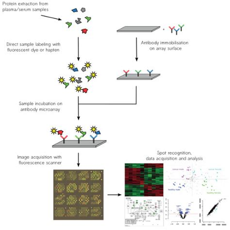 microarray workflow comprehensive protein profiling service sciodiscover