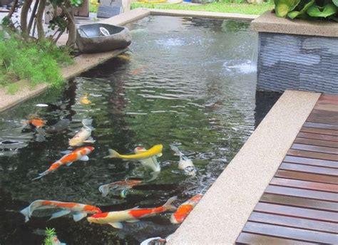 Pembersih Kolam Ikan rumah indah dengan kolam koi jasa desain gambar rumah minimalis murah harga terjangkau