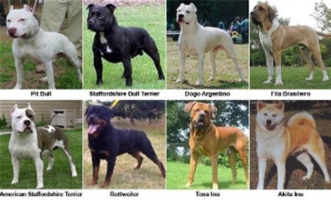 ley de razas de perros peligrosos boo the dogs razas de perros peligrosos eugeniodg