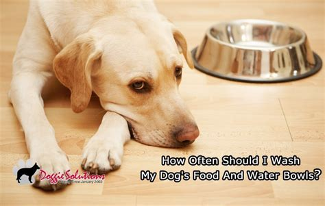 how often should a puppy how often should i wash my s food and water bowls