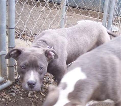 puppies for adoption philadelphia database error