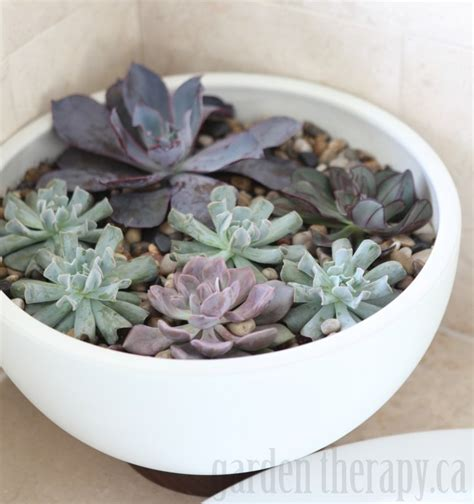 how to make a succulent planter modern succulent planter modernica case study garden