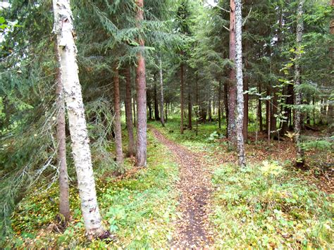 In A by File Trail In A Forest Jpg Wikimedia Commons