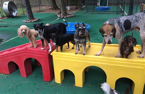 abc puppy daycare the woodlands tx abc pet resort