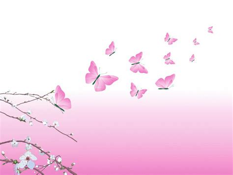 are yorkies color blind pink butterflies wallpaper wallpaper color chainimage
