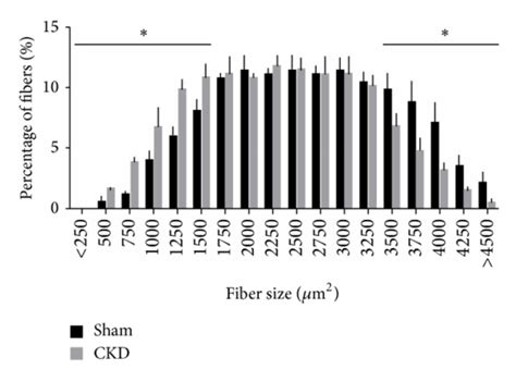 cross sectional area of muscle ckd decreases the cross sectional area csa of muscle