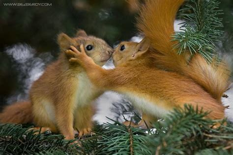 it s hd animals funny wallpapers amazing pictures of nature it s hd animals funny wallpapers most amazing pictures