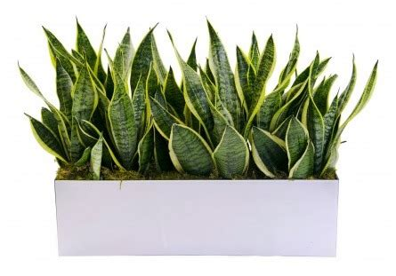 office cleaning   office  air purifying plants