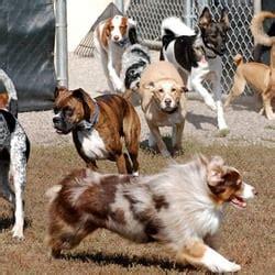 lucky pet lodge lucky pet lodge 10 billeder 36 anmeldelser dyrepasning 1067 american blvd