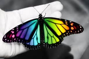 colorful butterfly colorful and pretty butterflies colorful butterfly by