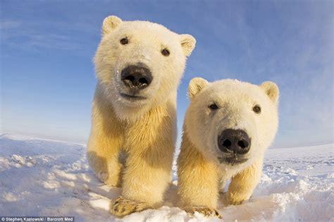 imagenes de osos impresionantes impresionantes im 225 genes que muestran el lado curioso de