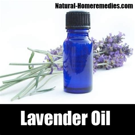 Does Lavender Kill Bed Bugs by 6 Cures For Bed Bugs How To Cure Bed Bugs