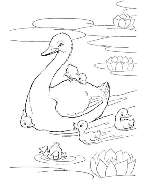 coloring pages ducks in a pond coloring ducks and the pond on pinterest