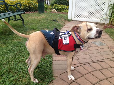 guardians light dog rescue abandoned dog turned service companion in need of saving