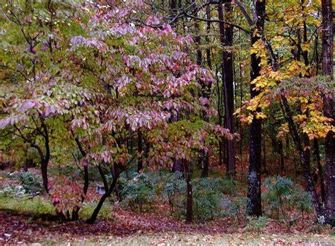 woodland garden shrubs blog woodland garden ideas pinterest