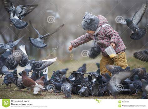 alimentazione piccioni alimentazione dei bambini una folla di grey e due piccioni