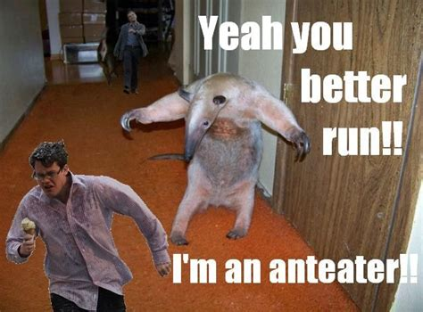 Anteater Meme - image 108571 i m an anteater know your meme