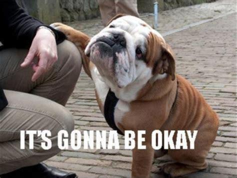Ptsd Dog Meme - 14 best english bulldog memes of all time