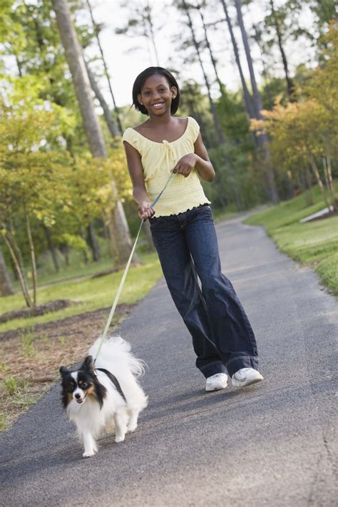 teaching a puppy to walk on a leash teach a to walk on a leash breeds