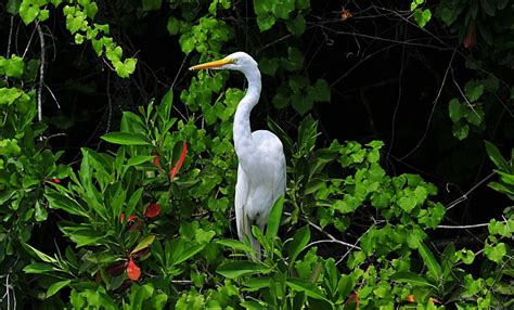 A White Heron Essay by The White Heron Analytical Essay Writinggroup361 Web Fc2