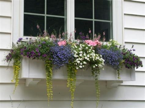 window box flower ideas 12 window boxes for amazing morning view