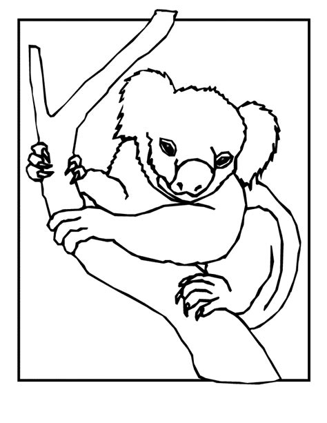 printable koala coloring pages free coloring pages of koala bears