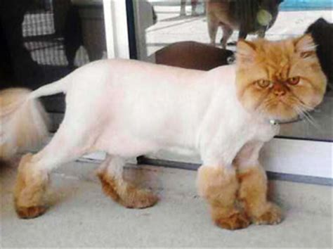 haircut for long hair cat 24 extremely stupid cat s haircuts wow amazing