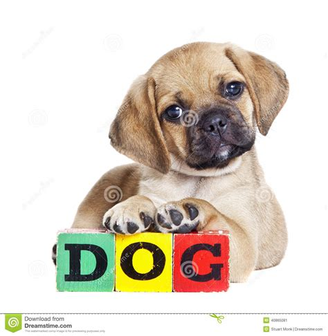 how to spell puppy stock photo image 40865081
