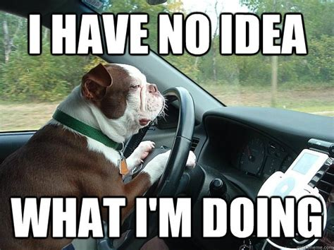 Driving School Meme - i have no idea what i m doing dog driving quickmeme