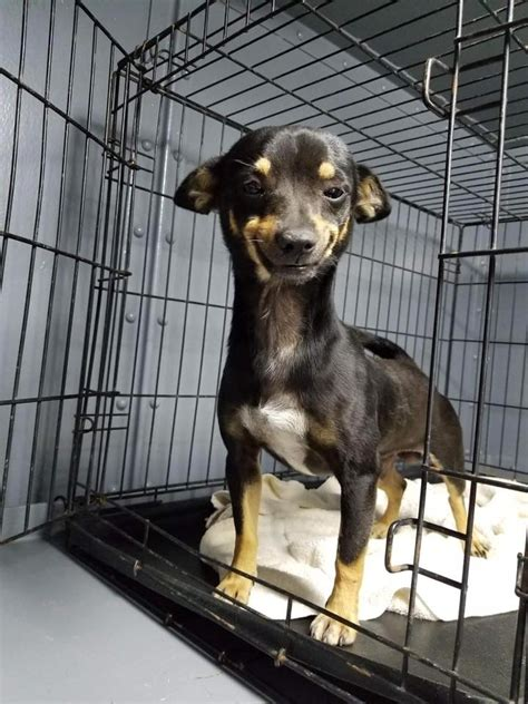animal shelter inundated  applications  smiling pup  viral