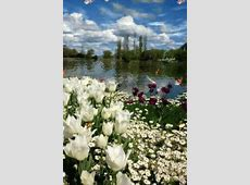 Spring Nature GIF - Spring Nature Butterflies - Discover ... Mac S Meadow
