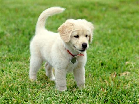 imagenes animales perros perros trabajodeprimerparcial714838