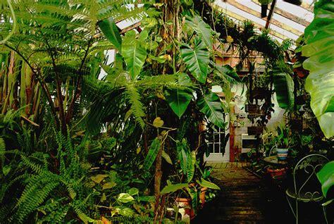 build   tropical rain forest exotic rainforest