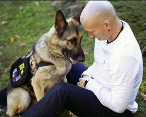 register as service animal service registration service registry