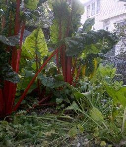Shade Vegetables Gardening Ideas Tips Pinterest Shade Garden Vegetables