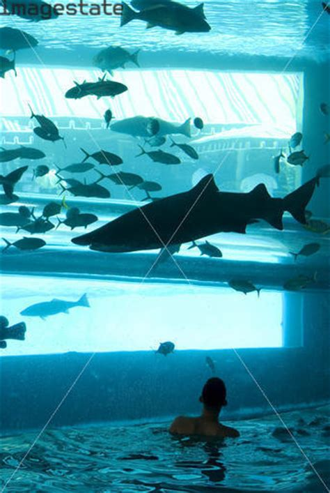 Free Shark Kacamata Renang 5 amazing swimmingpool in the world pict many picture here get it free