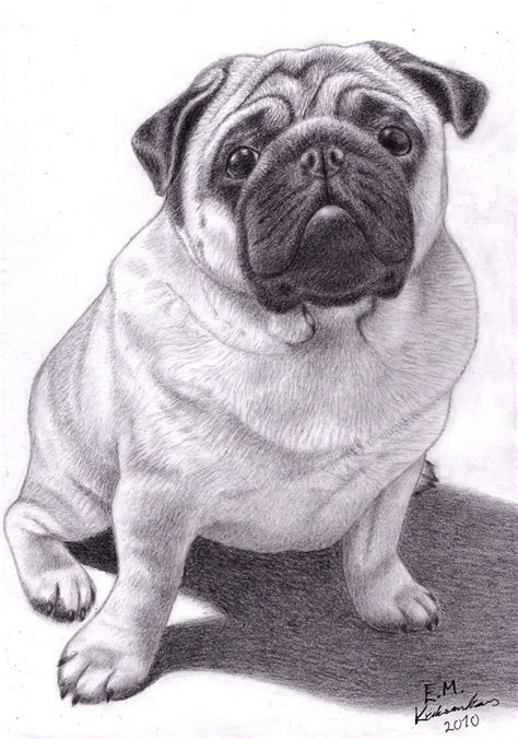 where can i buy a pug brucey the pug by elkenar on deviantart