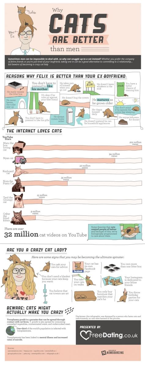 why are better the various reasons cats are better than clippity do