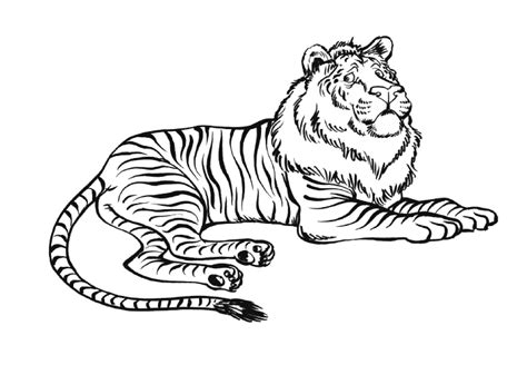 Coloriage Lion Tigre