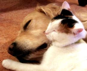introducing cats and dogs teaching dogs to get along with cats dogs and cats living together