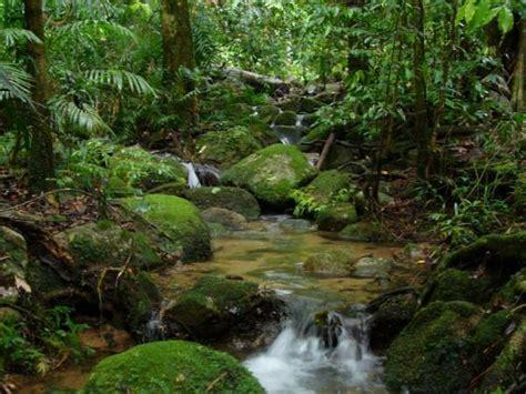 amazon rainforest tourism amazon forest