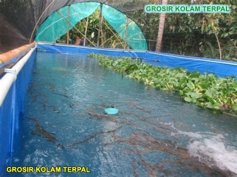 Harga Terpal Kolam Nila cara budidaya ikan nila di kolam terpal agro terpal