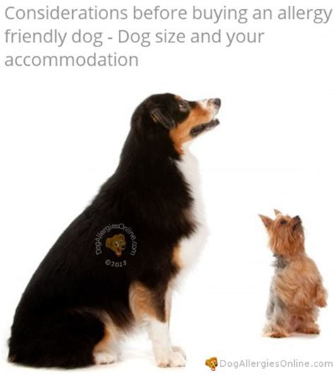 allergy friendly dogs considerations before buying an allergy friendly