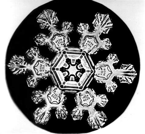 snowflake bentley camera snowflake bentley his unique snowflakes ever widening